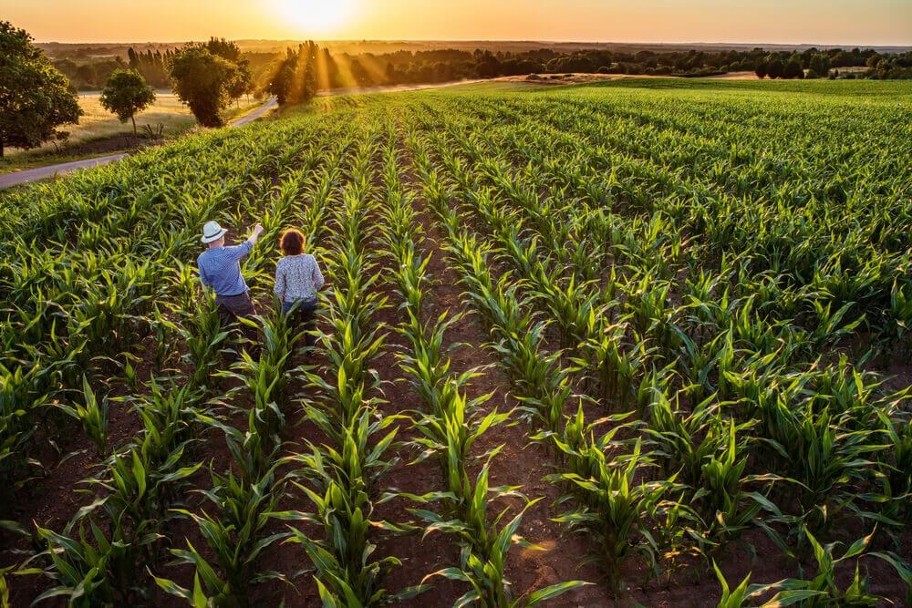 Clipping – Conjur – Pequena Propriedade Rural é Impenhorável Mesmo Quando Família Possui Outros Bens
